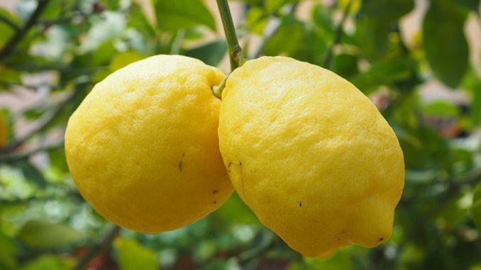 Il Limone di Siracusa in diretta su Rai Uno a Buono a Sapersi