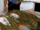 Trovato a Cassibile con 47 piante di canapa indiana in casa, arrestato dai Carabinieri