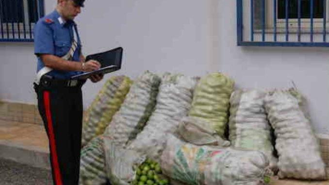 Rubano 500 chili di limoni da azienda agricola, arrestati dai carabinieri di Cassibile